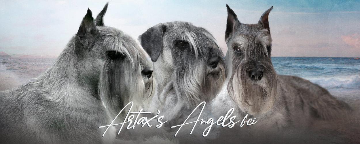 Artax's Angels FCI